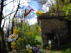 wildflowers at al Ronc