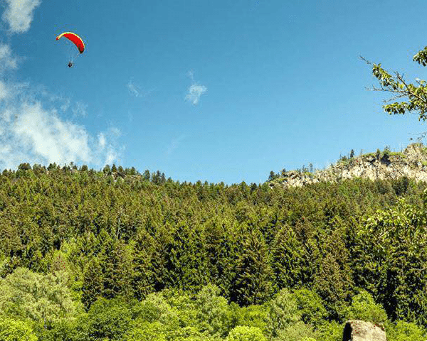 paragliding-over-trees
