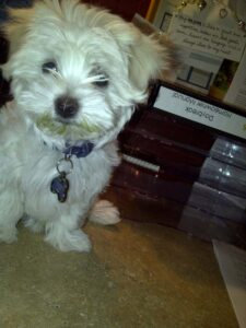 Lola with Greensmoothie 'Stache