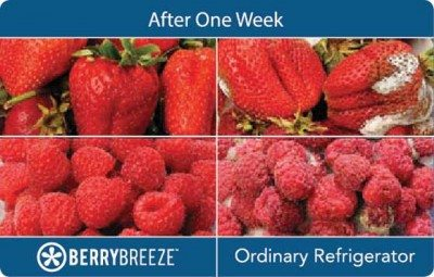 BerryBreeze Berries Comparison