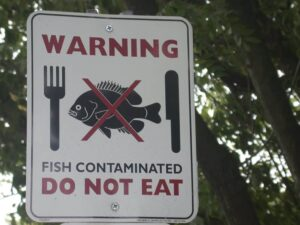 fish contaminated