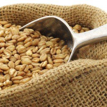 Einkorn Wheat