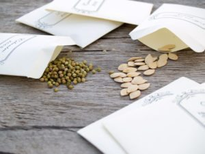 Use, save and store heirloom (non-gmo) seeds