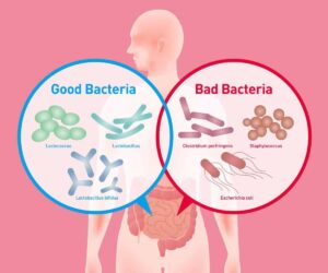 Good and Bad Gut Bacteria