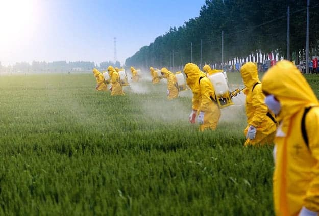 What is Glyphosate? | Wheat Is Good For You! (But Not How You're Eating It)