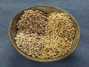 Wheat, Kamut, Spelt