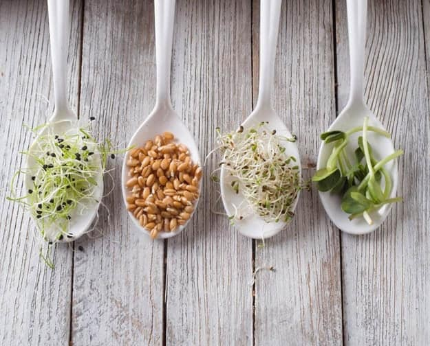 Sprouted Grains | Wheat Is Good For You! (But Not How You're Eating It)