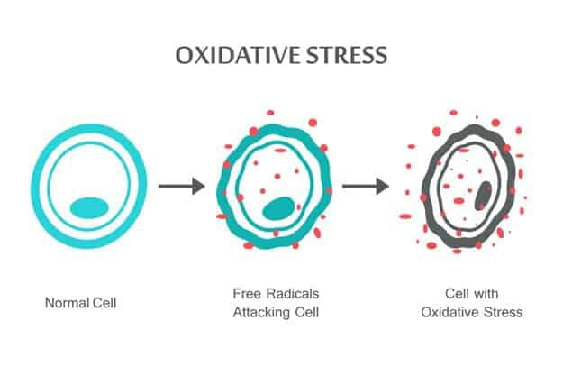 Oxidative Stress | Don't Get Your Calcium From Milk