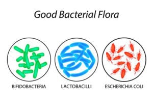 "Graphic of three types of good bacterial flora from ""What Are Probiotics Benefits? 11 Signs You're Deficient And What To Do About It"" by Green Smoothie Girl"