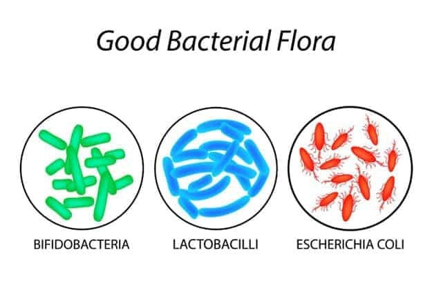 Good Bacterial Flora | What Are Probiotics Benefits? 11 Signs You're Deficient And What To Do About It