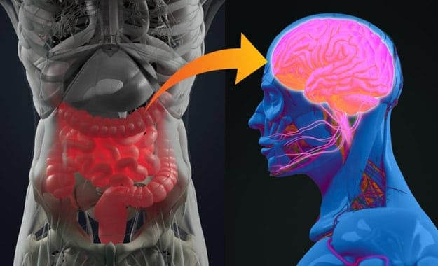 Brain and Gut Health | What Are Probiotics Benefits? 11 Signs You're Deficient And What To Do About It