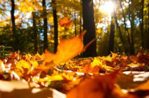 Autumn, sunshine, fallen leaves