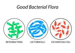 good gut bacteria