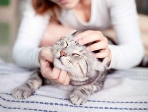 Pet Allergies   How to Clean up Air Pollution Inside Your Home
