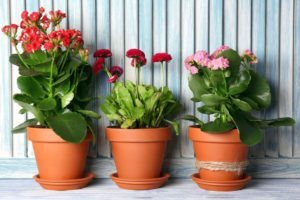 Use Plant Therapy to Beat Winter Blues!