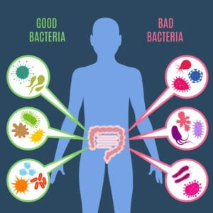 "Graphic of good and bad bacteria from ""Do You Really Need Prebiotics?"" at Green Smoothie Girl."