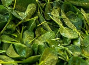 "Photograph of spinach leaves with an oil dressing, from ""What About Oxalates in Spinach?"" at Green Smoothie Girl."
