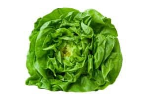Photo of butter lettuce, from