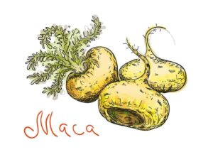 Graphic of maca, from