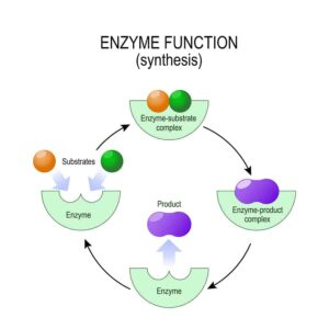 "Graphic of enzymes from ""Why Digestive Enzymes Matter--and Why You're Deficient"" at Green Smoothie Girl."