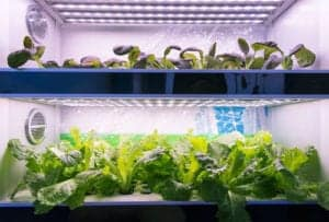 "Photo of a hydroponic garden, from ""Everything You Need To Know About Growing Your Own Smoothie Greens"" at Green Smoothie Girl."