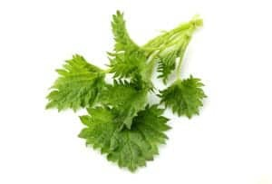 "Photograph of nettle leaves against a white background, from ""12 Delicious Edible Weeds to Forage for Green Smoothies"" at Green Smoothie Girl."