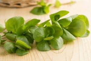 "Photograph of purslane leaves on a wooden surface, from ""12 Delicious Weeds to Forage for Green Smoothies"" at Green Smoothie Girl."