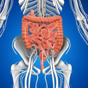 Graphic of the human GI tract from