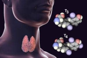Graphic of thyroid hormones from