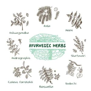 "Drawing of Coleus Forskohlii and other herbs from ""Natural Treatments for Urinary Tract Infections (UTIs)"" by Green Smoothie Girl"