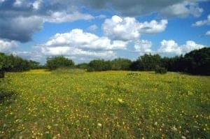 "Photo of Texas yellow wildflowers landscape from ""Why I Developed The Flash Fast: Modified Fasting Made Easy And Fun"" by Green Smoothie Girl"