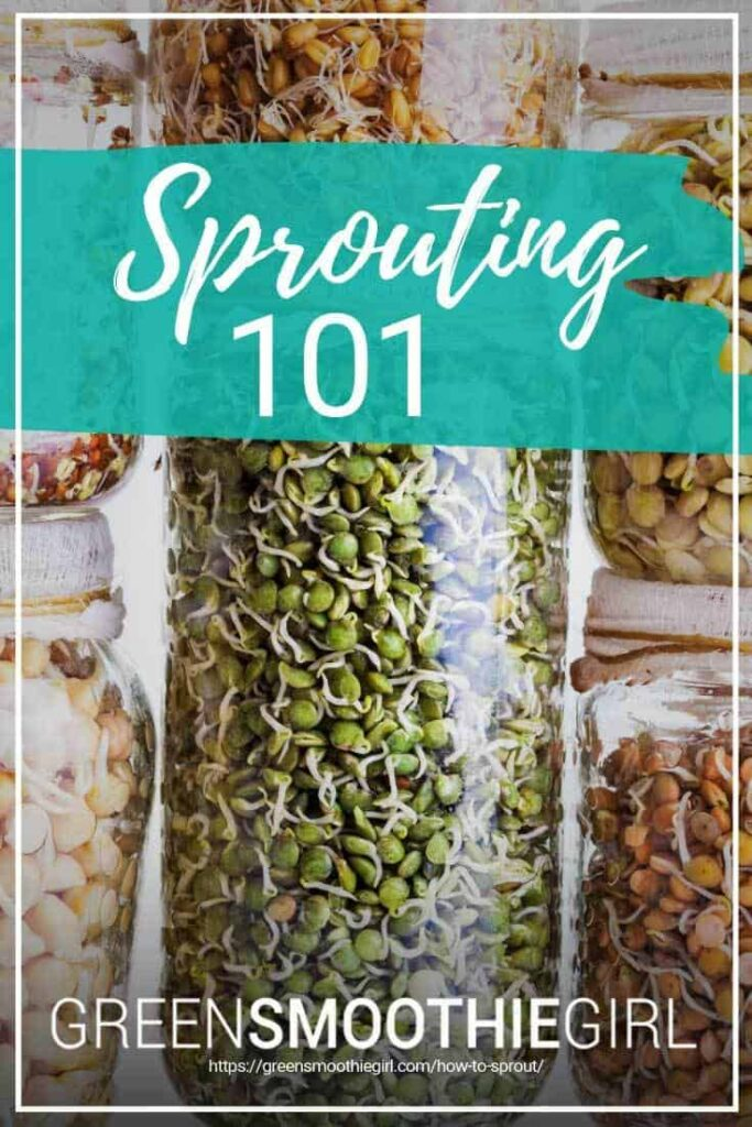 Sprouting 101 from GreenSmoothieGirl
